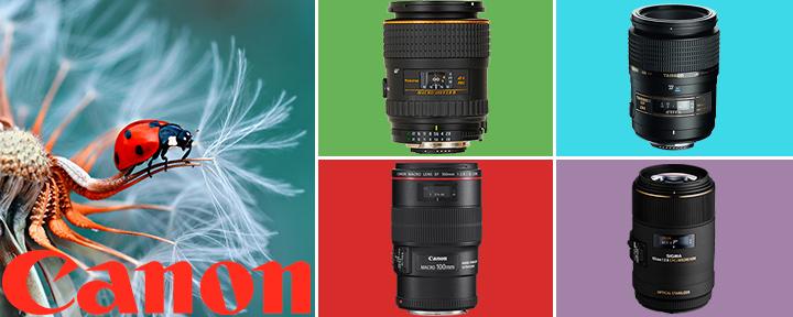 Лучшие макро объективы 2017 года для фотоаппаратов Canon