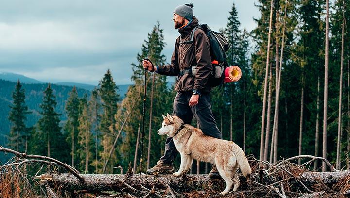 Лучшие породы собак для пешего туризма